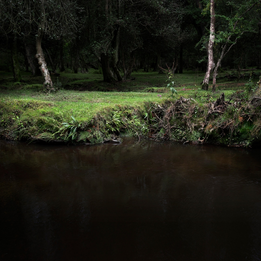 ellie-davies-wood-photos-07.jpg