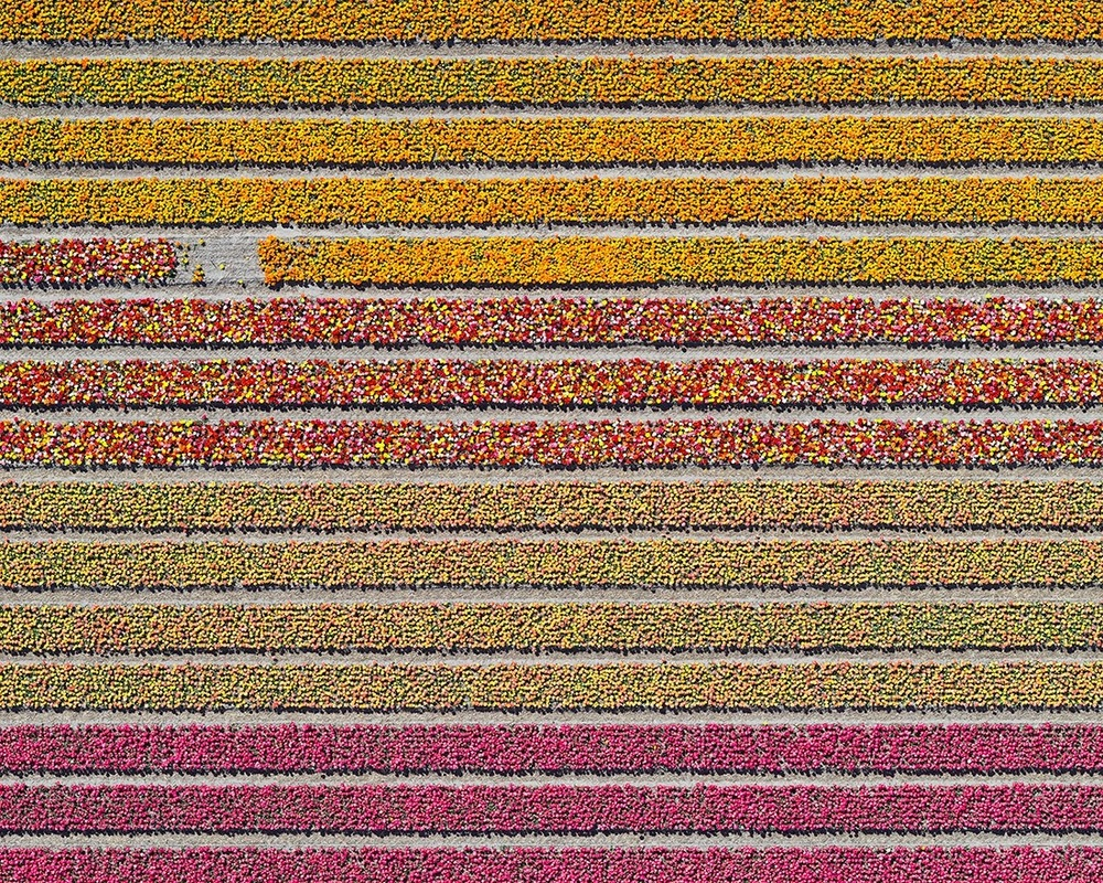 "All photos, Bernhard Lang, ""Tulip Fields"" series"