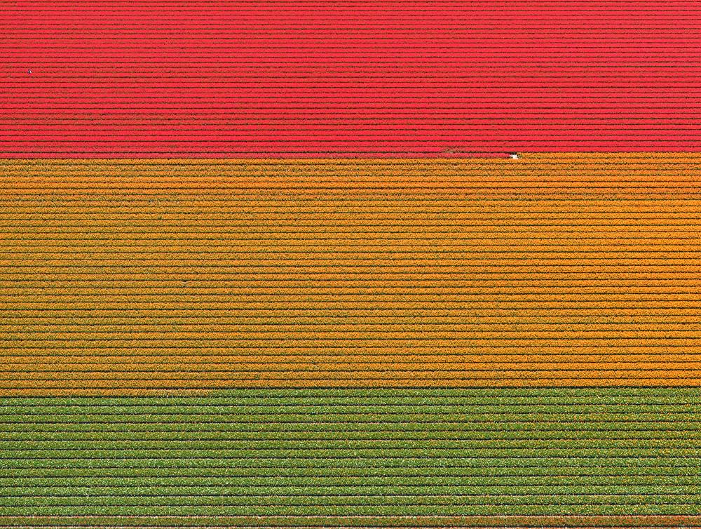tulip-fields-bernhard-lang-foto-aeree-02.jpg