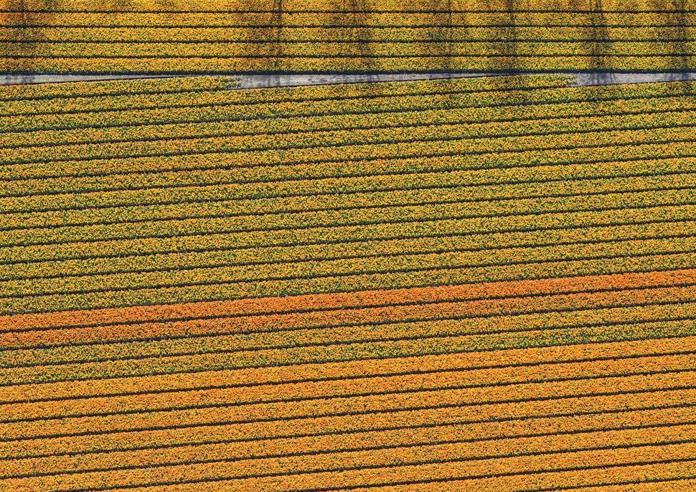 tulip-fields-bernhard-lang-foto-aeree-03.jpg