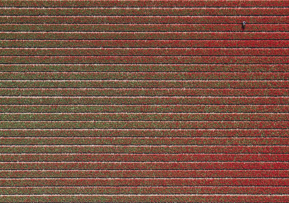 tulip-fields-bernhard-lang-foto-aeree-07.jpg