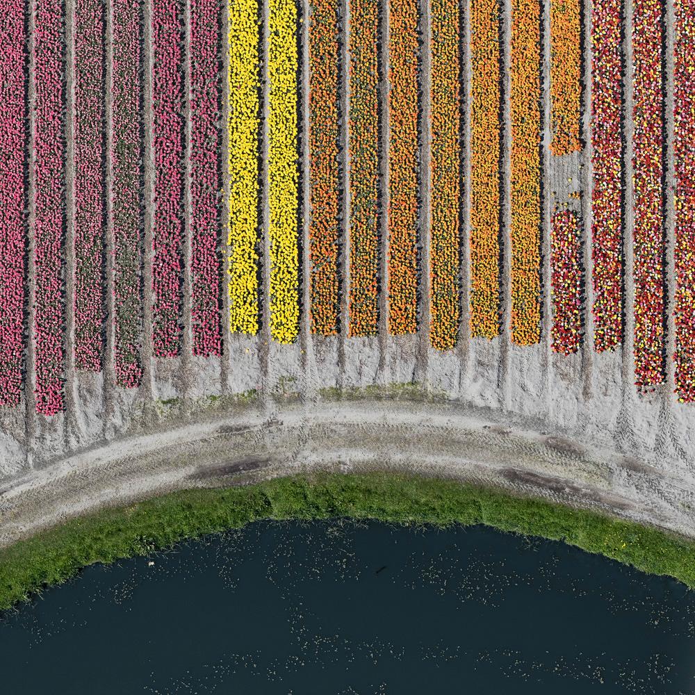 tulip-fields-bernhard-lang-foto-aeree-08.jpg