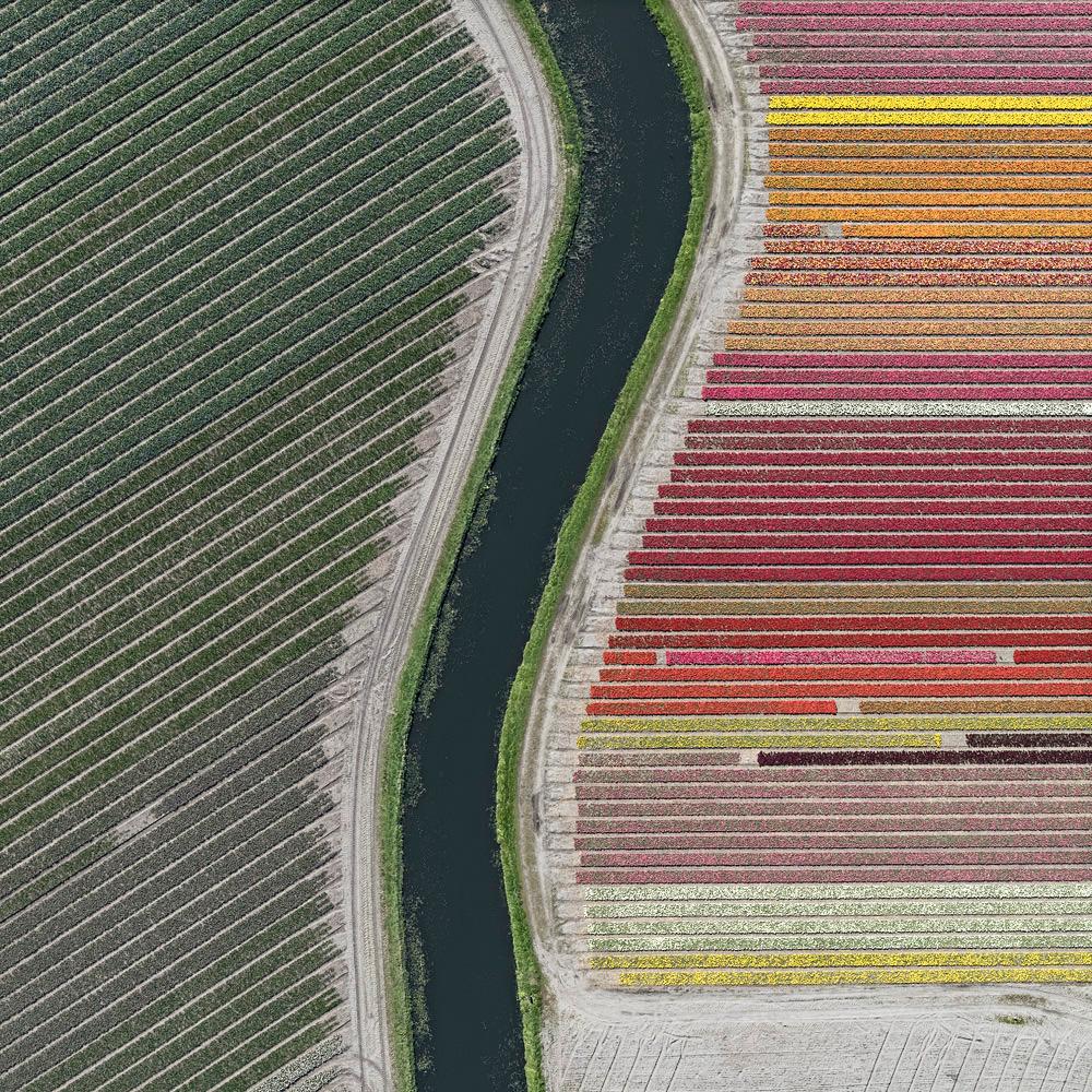 tulip-fields-bernhard-lang-foto-aeree-09.jpg