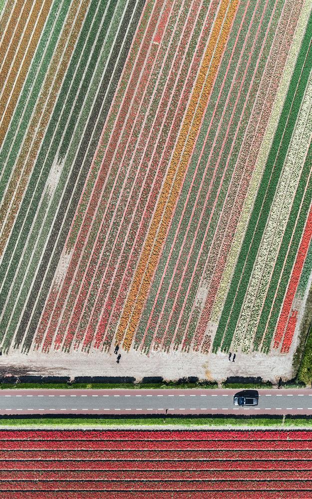 tulip-fields-bernhard-lang-foto-aeree-10.jpg