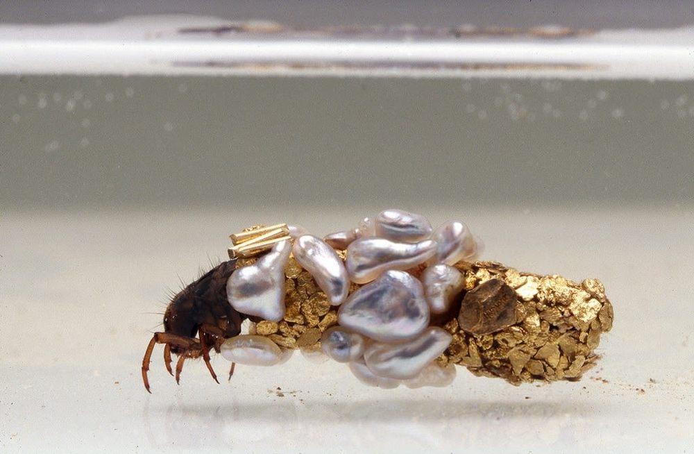 Larva di tricottero con bozzolo, 1980-2000. Materiali: oro e perle. Dimensioni: 0.5 x 1.9 cm. Fotografia: Frédéric Delpech. Image courtesy: artista e Art:Concept gallery, Parigi e MONA Museum of Old and New Art.