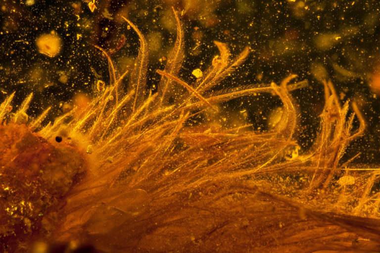 Questa foto catturata con lo scanner micro-CT mostra i minuti dettagli delle piume. Immagine via Lida Xing