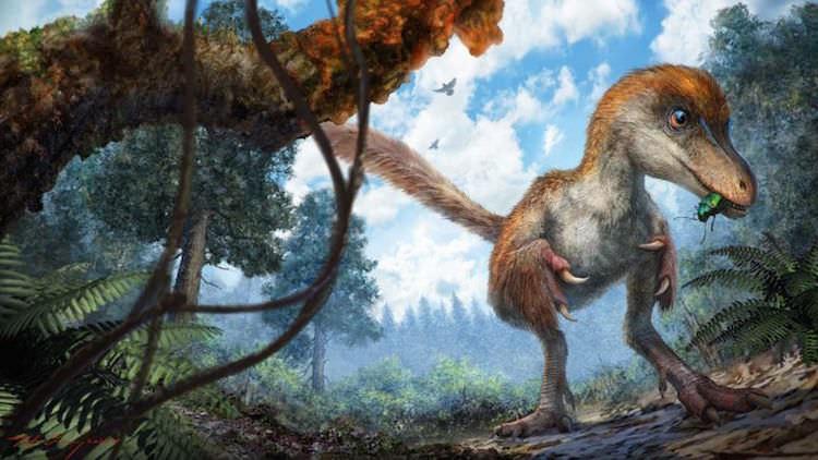 Il giovane esemplare di dinosauro potrebbe essere stato così. Immagine via Chung-tat Cheung