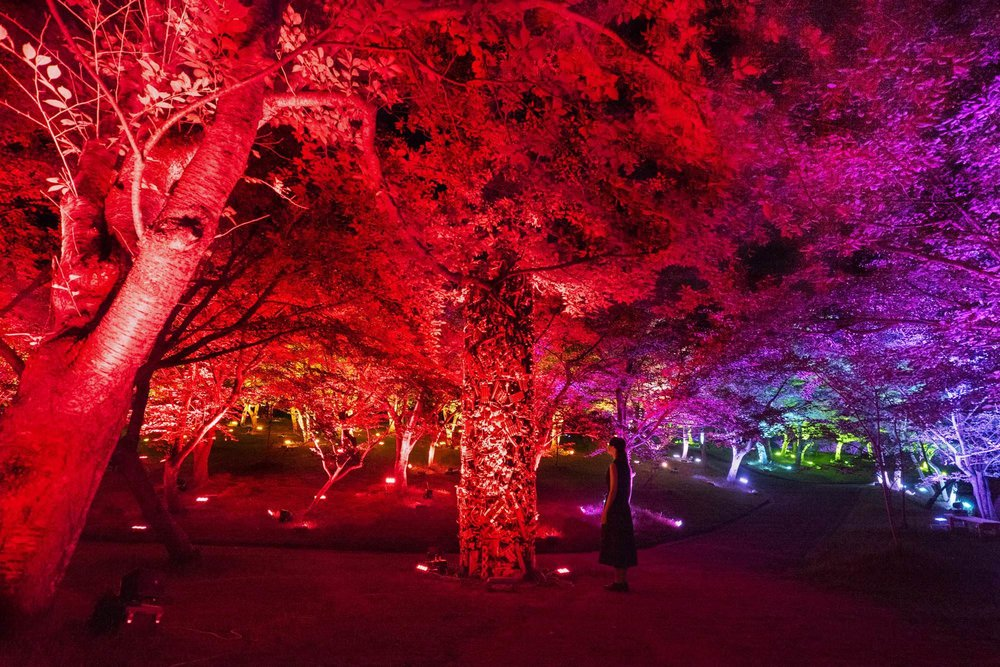 "Teamlab. ""Resonating Forest - Cherry Blossoms and Maple"""
