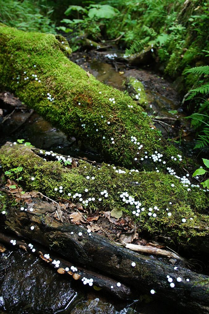toshihiko-shibuya-white-generation-2-09