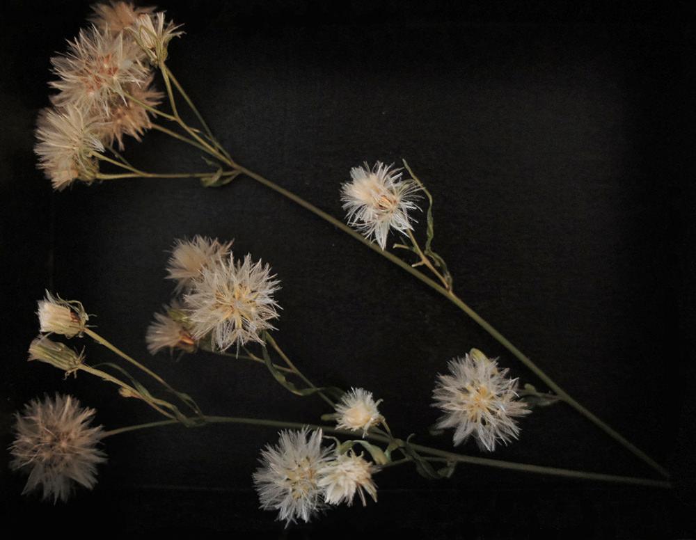 toshihiko-shibuya-white-collection-black-boxes-10
