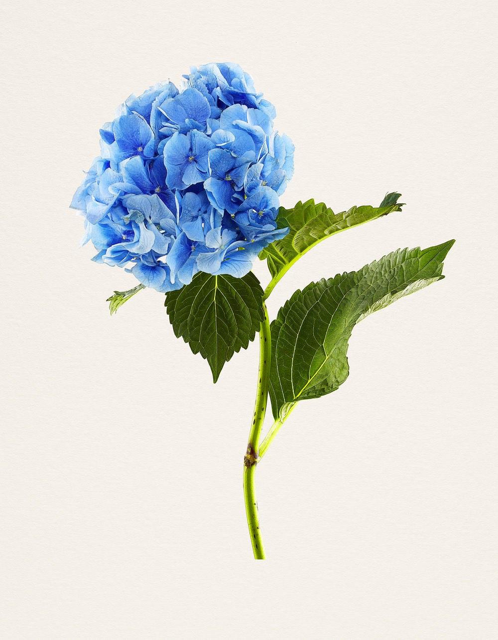kenji-toma-beautiful-flowers-03.jpg