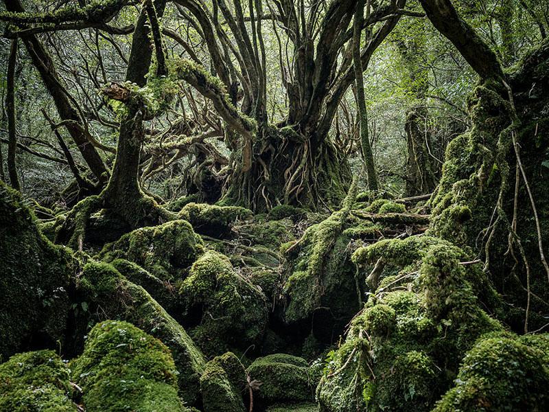 Raphael Olivier, Yakushima- Forest Spirit.All images ©Raphael Olivier