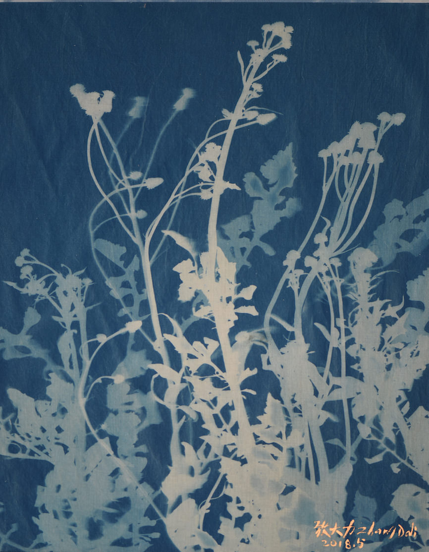 Zhang Dali, Erbe Selvatiche (50X40cm) Cyanotype on Cotton 2018