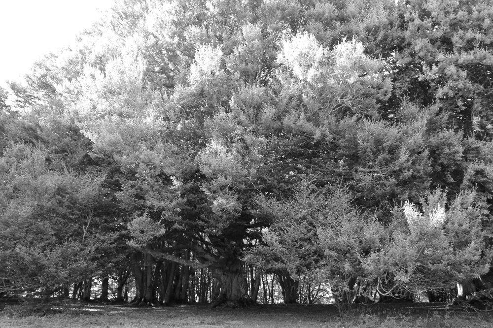 foto fabio-strinati-03.jpg