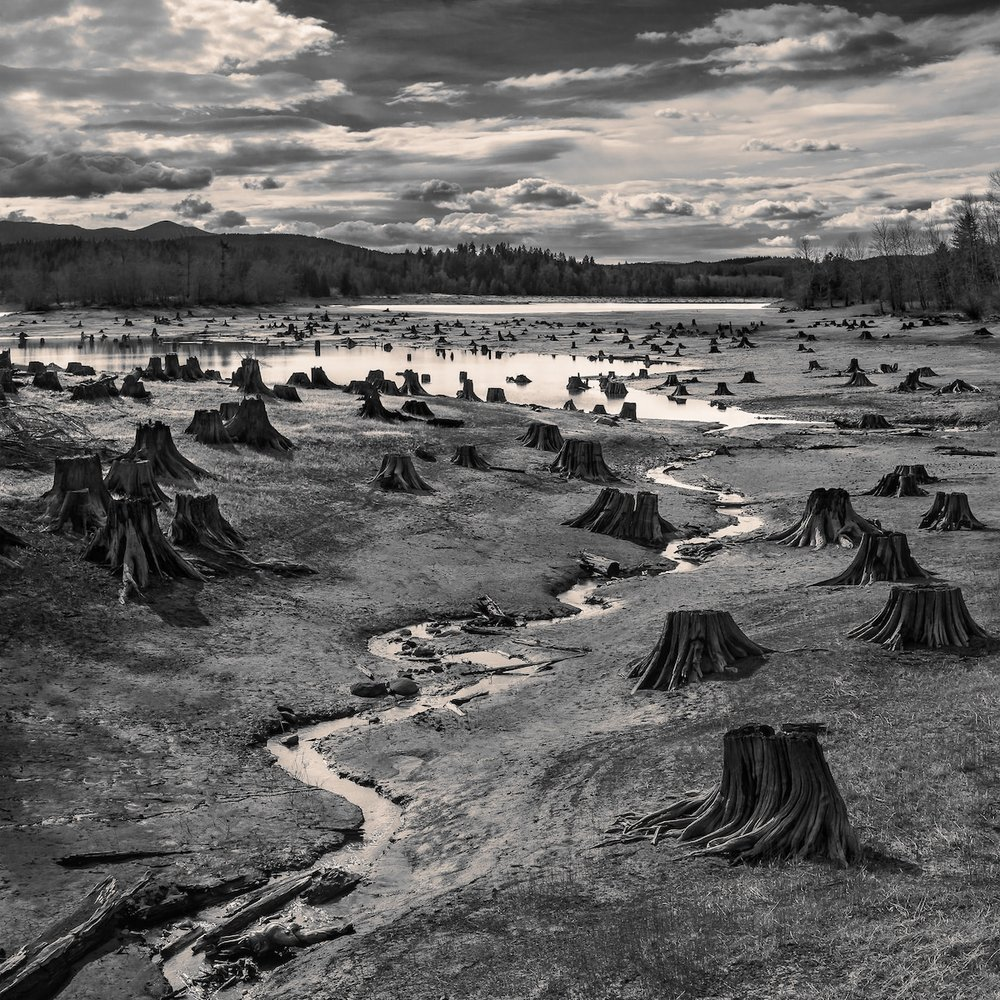 """Stumps, Alder Lake, Nisqually River, Oregon"" by Hal Gage, United States of America, 1st Place, Open, Landscape (Open Competition), 2019 Sony World Photography Awards"