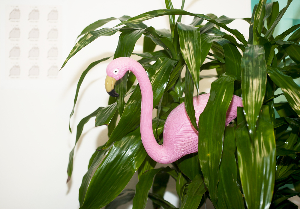 Yep, that's a faux flamingo in the office. Photo by Rachel Yabsley for The Dream Job.