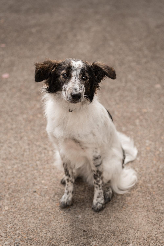 06-June-Pups-2.jpg