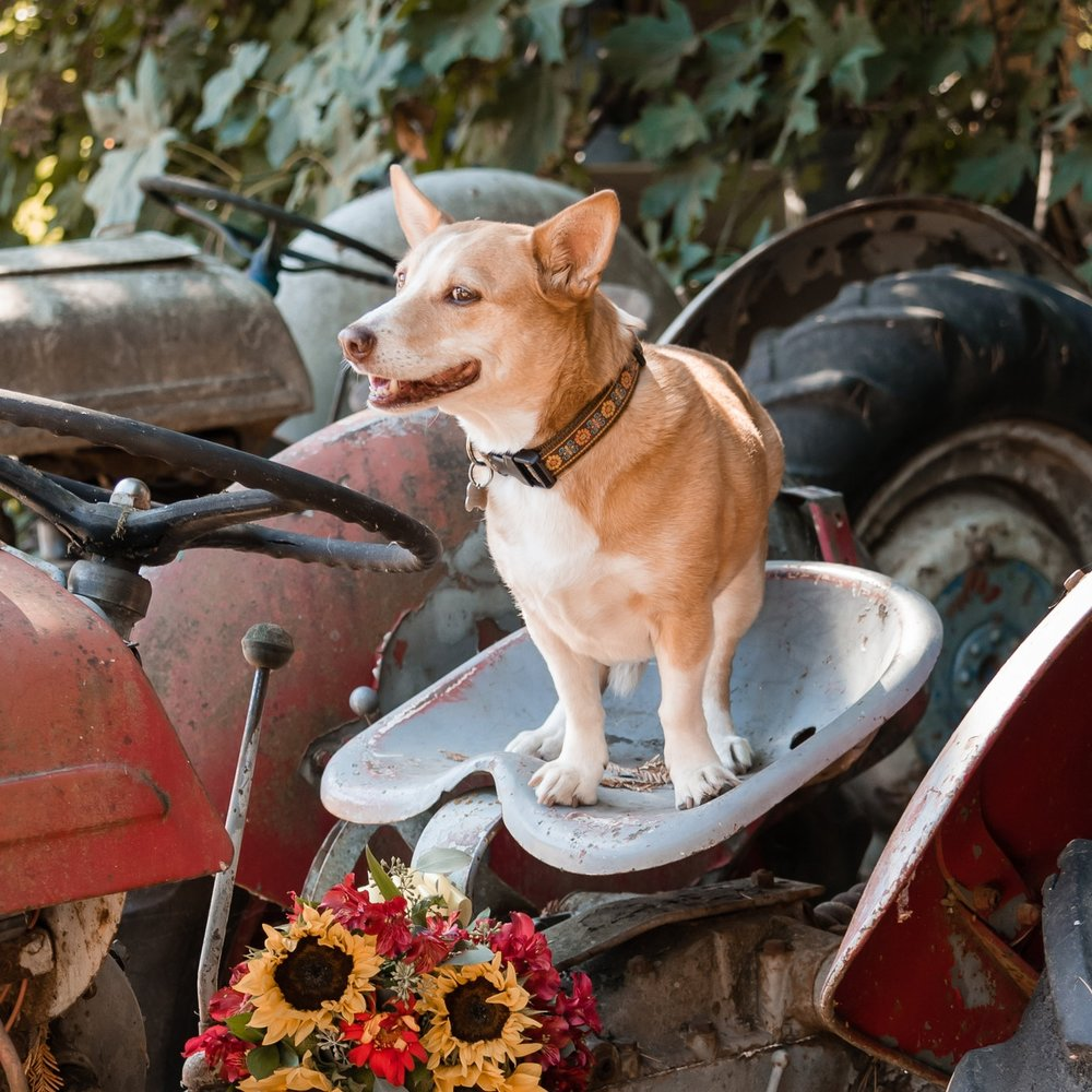 10-October-Pup-2.jpg