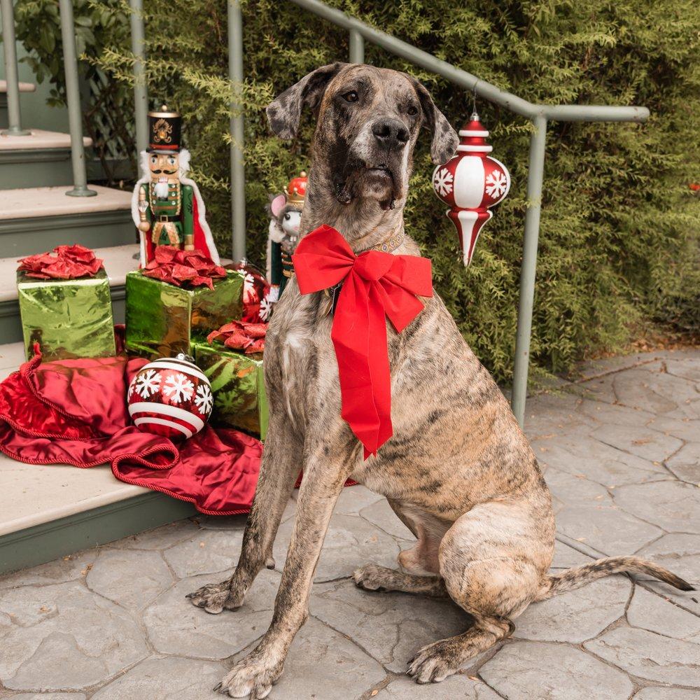 12-December-Pup-3.jpg