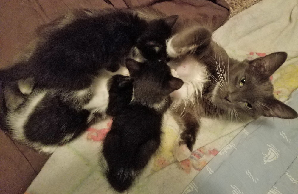 More temporary tenants at Laura's foster kitty home: a sweet mama and her kittens.