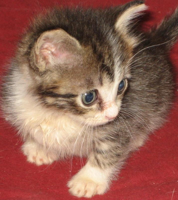 lauras kitten.JPG