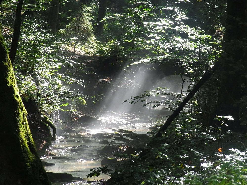 forest-54555_1920.jpg