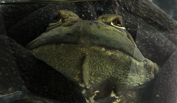 frog2mestraight fixa sm.jpg