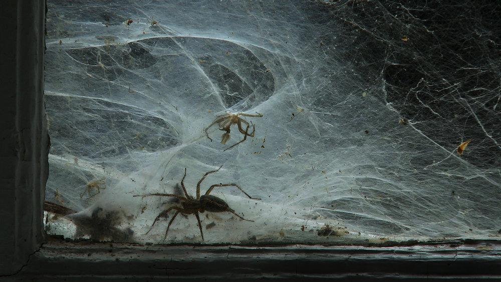 spider fs2.jpg