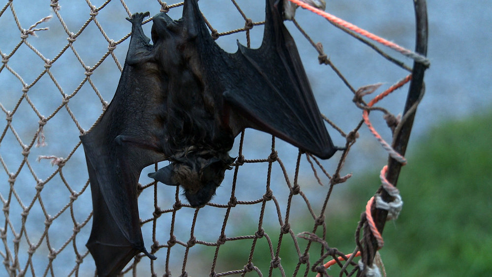 bat on net upside down.jpg