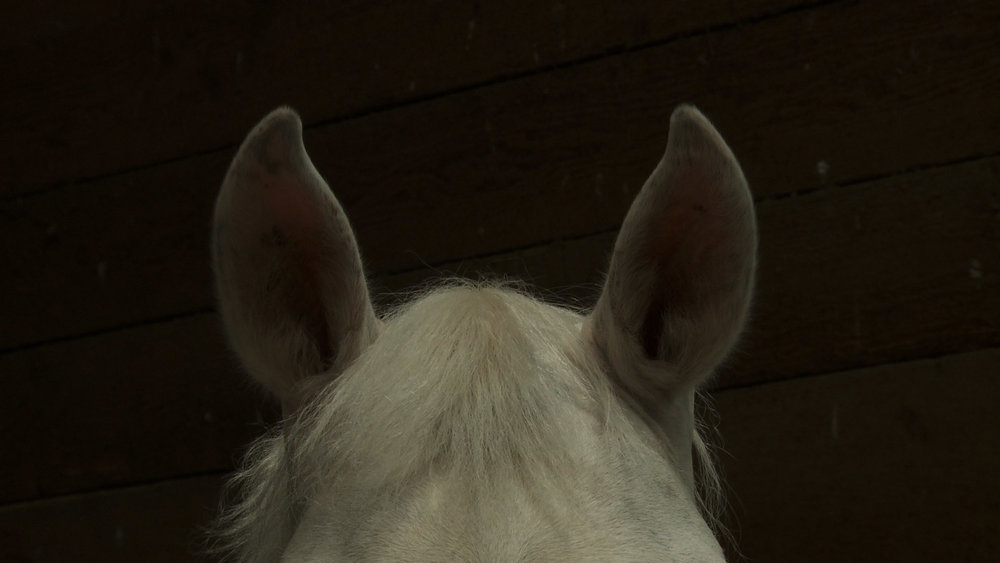 horse ears2.jpg