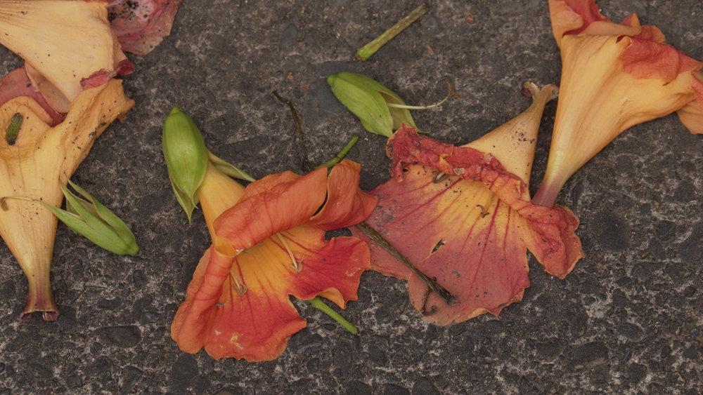 TINY petunias.jpg