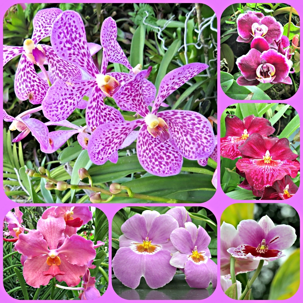 Orchid Collage 1
