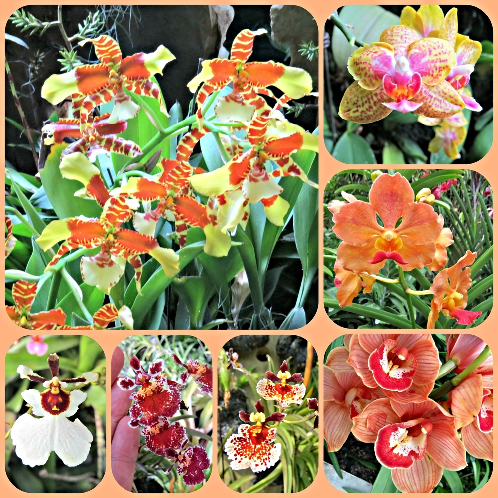Orchid Collage 2