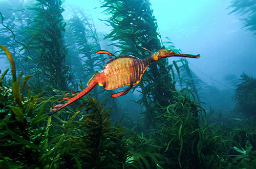 support-marine-parks-blue-the-film
