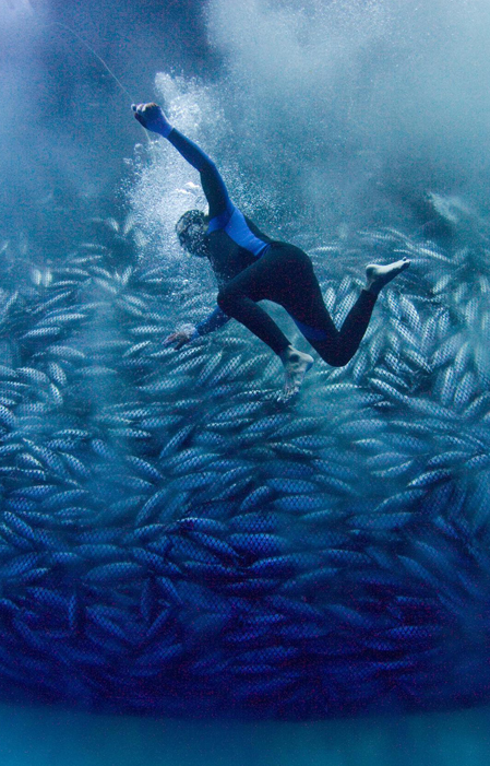Overfishing. - There are no longer 'too many fish in the sea'.Fish populations of some key species have been reduced to only 10% of what they were in the 1950s.The scale of the modern fishing industry has become enormous. Nets large enough to haul a dozen 747 aeroplanes, trawl behind factory fishing vessels, scooping up anything in their path. A huge amount of by-catch (unwanted species such as endangered sharks, turtles and dolphins) are thrown back into the sea – dying or dead.Industrial-scale methods used to catch the fish are destroying habitats and devastating marine life. Bottom trawlers rake the sea for scallops and prawns, leaving wide swaths of seabed desolate as deserts. Long lines, hundreds of kilometres in length and baited with thousands of hooks swing enticingly, indiscriminately ensnaring any kind of wildlife.Illegal fishing vessels are operating all over the world, fishing in prohibited territories.The area of seabed trawled by the world's fishing fleet is 150 times the area of forests cut down every year.Changes can be made to improve conditions. People who eat seafood can demand sustainable fish. Vessels can implement smart fishing practices that eliminate by-catch, waste and overfishing. Governments can reduce harmful subsidies and crack down on unregulated fishing.1/5 fish are caught illegally and 80% of the world's fish stocks are already fully exploited.'Sustainable seafood' is seafood which reaches our plates with minimal impact on fish populations and the marine environment. It can be wild-caught or farmed in aquaculture. But very few fisheries are actually certified as sustainable throughout the world.Image credit: Alex Hofford / Greenpeace