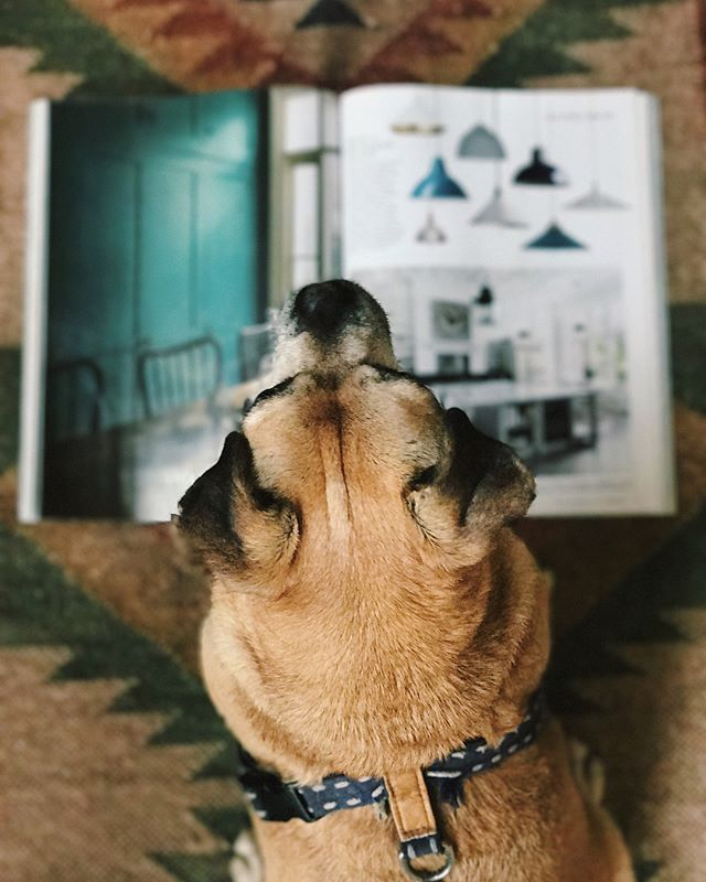 • Sunday reading 🐶• So thrilled to see two of our kitchens in the latest issue of @houseandgardenuk . . . #houseandgardencountryhouse #puglife #countryhouseinteriors #kitchendesign #houseandgarden #haminteriors #designinspo #sundayreading