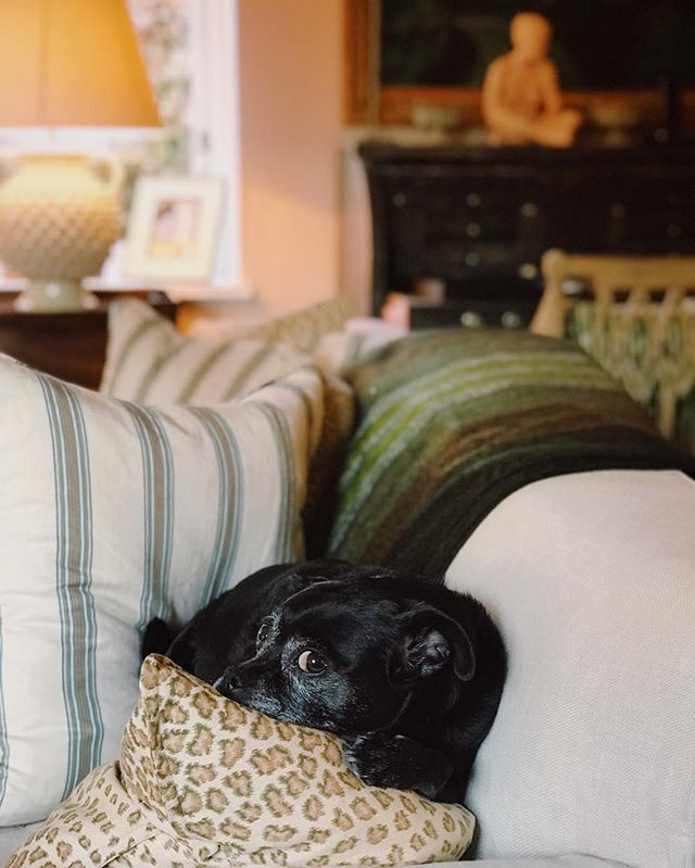 Betty's go to spot for rainy days 🌧. . . #whereissummer #rainydays #bannedfromthissofa #sideeye #englishhome #puglife #mycozyweekendcorner #ihavethisthingwithstripes