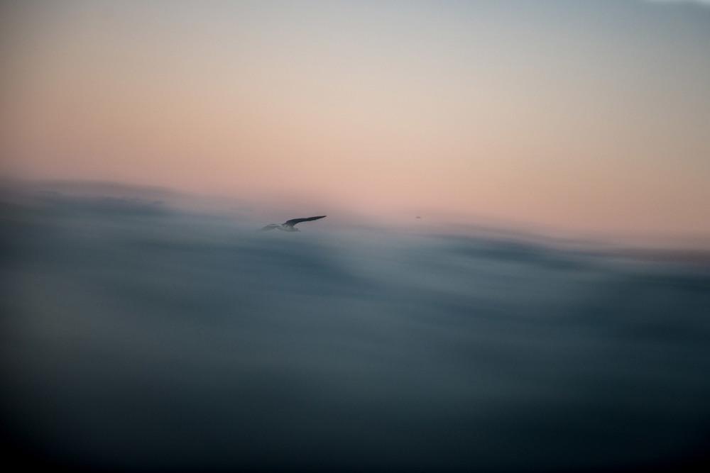 moonlightatpeahi_bird.jpg