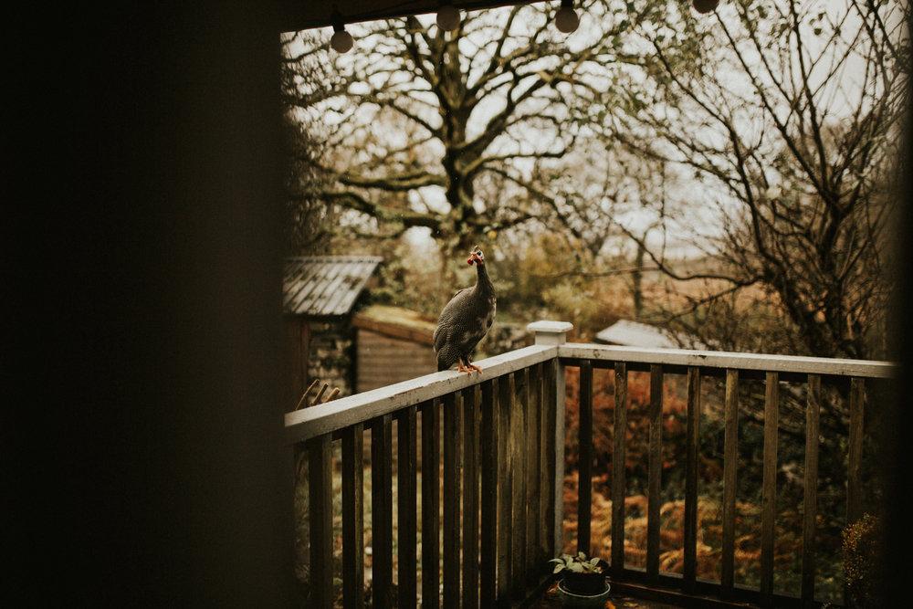 Snowdonia-Wales-Log-Cabin-Garthyfog-Darina-Stoda-Photography-5.jpg