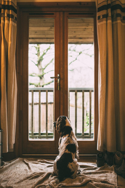 Snowdonia-Wales-Log-Cabin-Garthyfog-Darina-Stoda-Photography-7.jpg