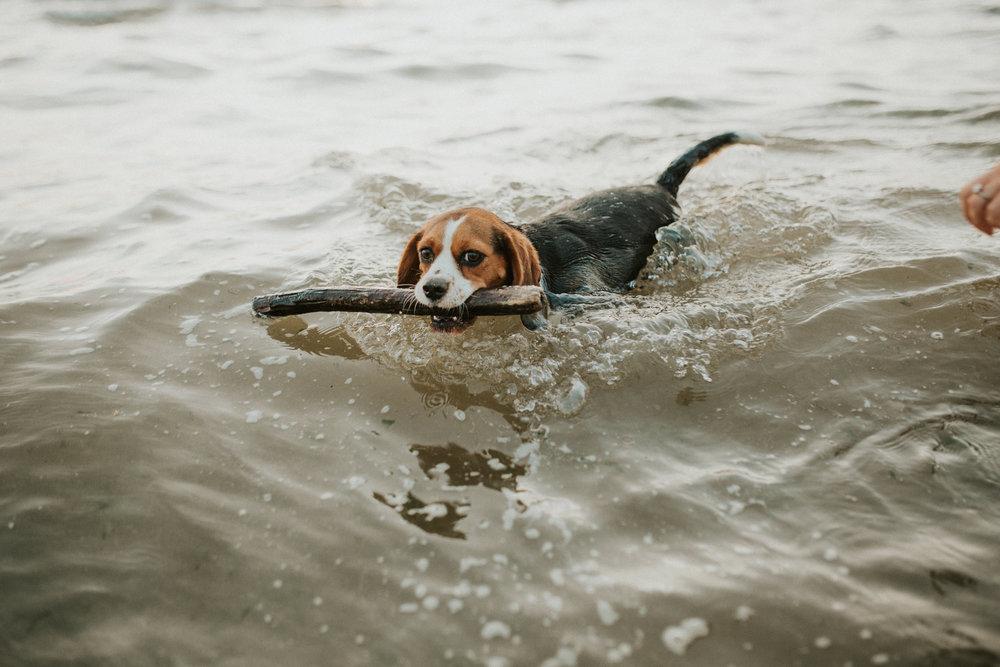 Katrina-Mike-Engagement-Beach-Coastal-Dog-Session-Shoot-Photography-Darina-Stoda-Norfolk-93.jpg