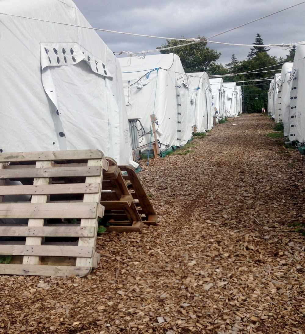 Thisted Tent Camp.jpg