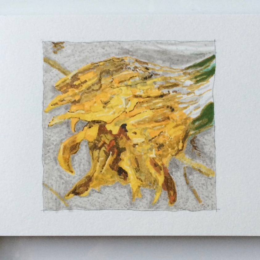 "'Hawksbeard Decay'   2015  Faber Castell PITT artist pen (archival ink) on  cold press, acid free, 140lb / 300gsm watercolour paper.  Small artwork 4x4""   Original  AVAILABLE   €80   Prints from €35"
