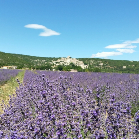 Lavender field and Simiane la Rotonde