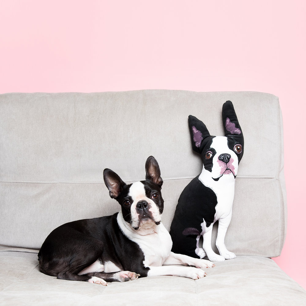 boston terrier dog pillow