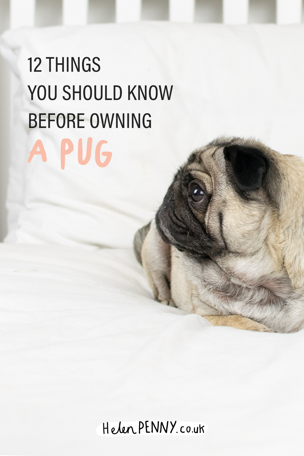12 things you should know before owning a pug