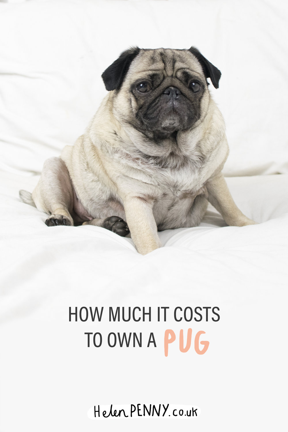 How much it costs to own a pug helen penny