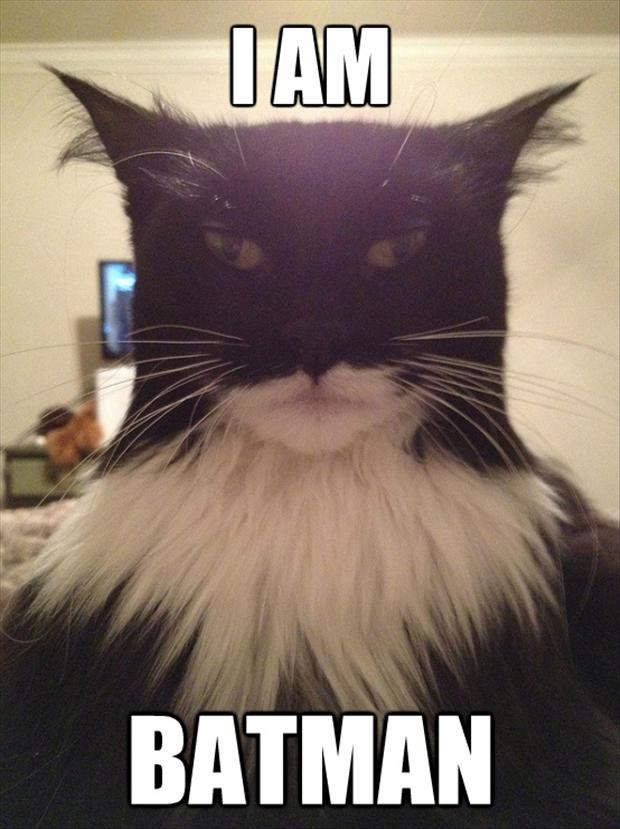 i-am-batman-funny-pictures.jpg