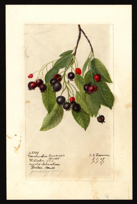 USDA watercolor.jpg