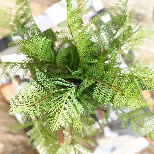 Realistic-looking faux plants are a beautiful, bright, and maintenance-free way to keep a little greenery in your home all year round. We're especially fond of the ferns here at Weekender House...